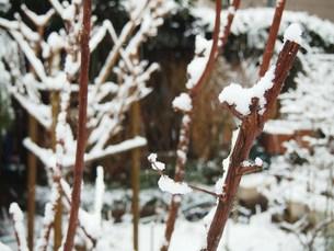 雪景色の写真素材 [FYI00234133]