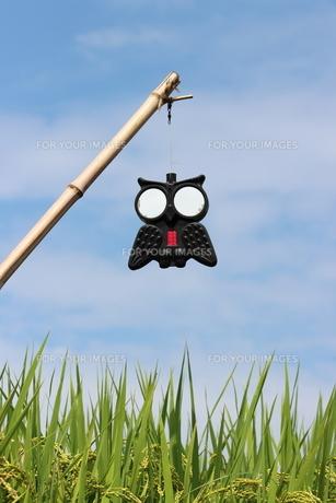 かわいいフクロウの鳥よけの写真素材 [FYI00234171]