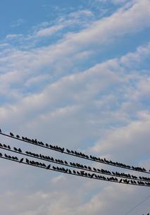 青空とスズメたちの写真素材 [FYI00234217]