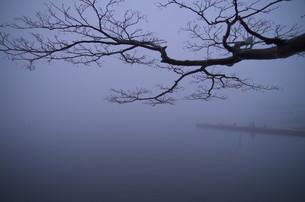 霧の素材 [FYI00234949]