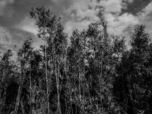 薮の中の写真素材 [FYI00235181]