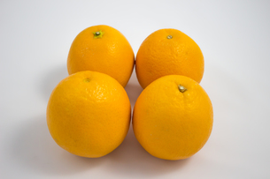 オレンジの写真素材 [FYI00235206]