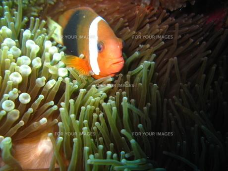 サイパンの海の写真素材 [FYI00235350]