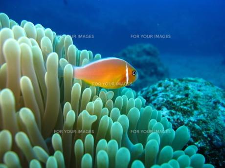 サイパンの海の写真素材 [FYI00235351]