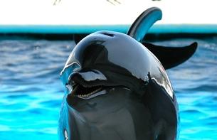 dolphin...の写真素材 [FYI00235415]