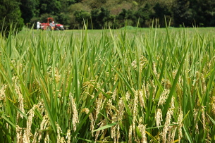 収穫…の写真素材 [FYI00235434]