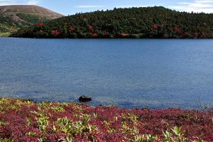 クロマメノキの草紅葉と鎌沼の写真素材 [FYI00235479]