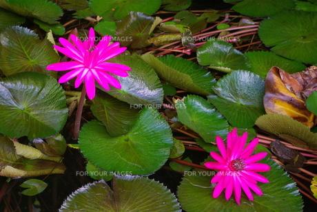 花とカエルの写真素材 [FYI00235497]
