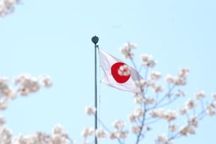 日の丸と桜の写真素材 [FYI00235618]