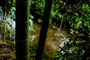 竹林と小川の素材 [FYI00235893]