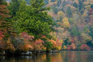 中禅寺湖の紅葉の写真素材 [FYI00235939]