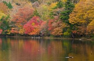 中禅寺湖の紅葉の写真素材 [FYI00235940]