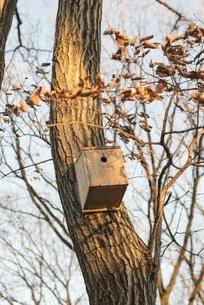 鳥の巣の写真素材 [FYI00236241]