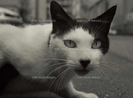 Cat Streetの写真素材 [FYI00236732]