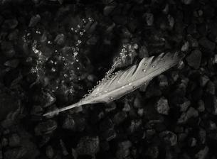 Dropsの写真素材 [FYI00236743]