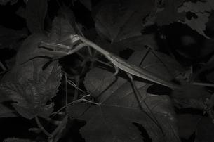 Night Watchの写真素材 [FYI00236751]