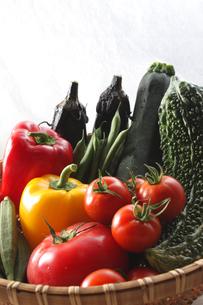 夏野菜の写真素材 [FYI00237266]