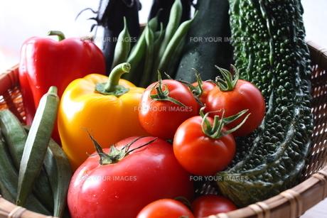 夏野菜の写真素材 [FYI00237270]