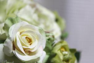 白い薔薇の写真素材 [FYI00237618]