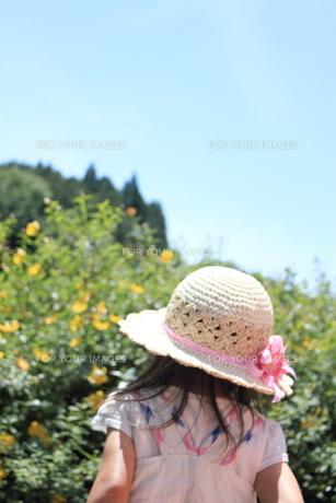 麦わら帽子の写真素材 [FYI00237685]