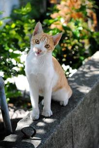 首を傾げた猫の写真素材 [FYI00237803]