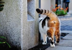猫のおしりの写真素材 [FYI00237809]