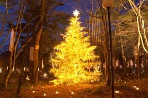 軽井沢森の中のクリスマスツリーの素材 [FYI00238239]