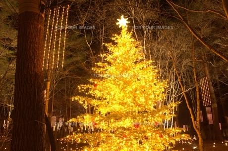 軽井沢の森の中のクリスマスツリーの素材 [FYI00238245]