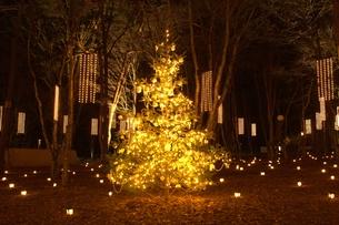 軽井沢の森の中のクリスマスの素材 [FYI00238263]