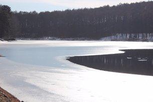 信州の凍り付く飯綱大座法師池の素材 [FYI00238292]