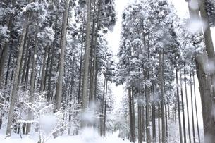 信州の山間の雪景色の素材 [FYI00238314]