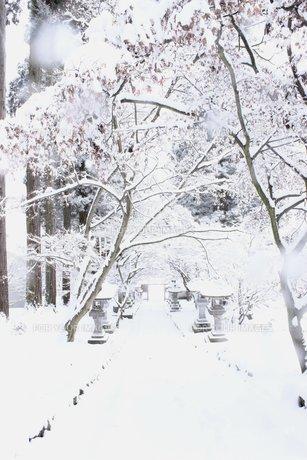 雪に包まれる信州の山道の素材 [FYI00238315]