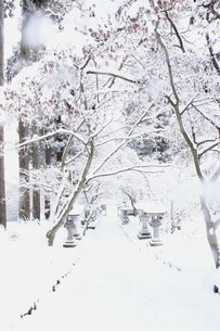 雪に包まれる信州の山道の写真素材 [FYI00238315]