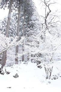 信州の雪降る山間の風景の素材 [FYI00238318]