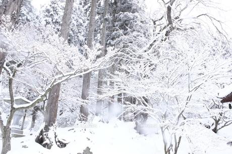雪が降る山間の信州の風景の素材 [FYI00238324]