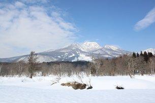 雪原の妙高高原のきれいな晴れの風景の写真素材 [FYI00238416]