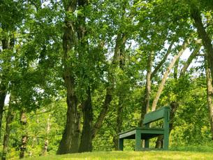 丘のベンチの写真素材 [FYI00238602]
