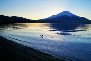 黄金色に輝く山中湖と富士山の写真素材 [FYI00238609]