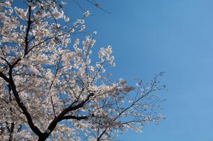 春の訪れの写真素材 [FYI00238783]