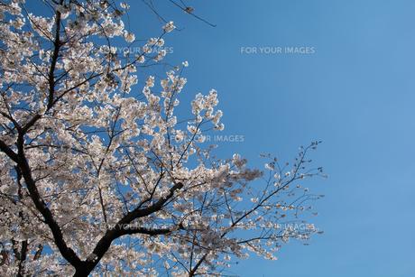 春到来の写真素材 [FYI00238795]