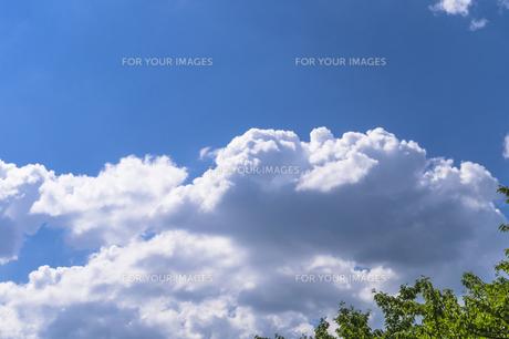 青空と葉っぱの写真素材 [FYI00238932]