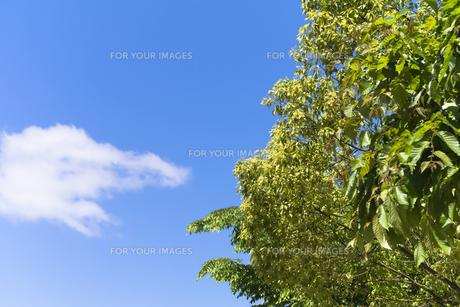 新緑と青空の写真素材 [FYI00238937]
