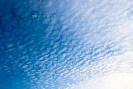 うろこ雲の素材 [FYI00238999]