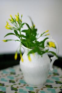 FLOWERの写真素材 [FYI00239095]