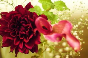 FLOWERの写真素材 [FYI00239106]