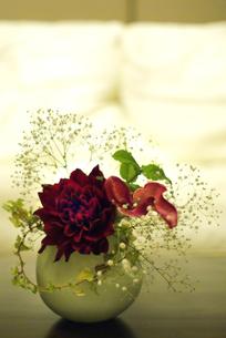 FLOWERの写真素材 [FYI00239110]
