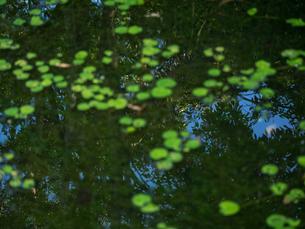 池に映る木々の写真素材 [FYI00239169]
