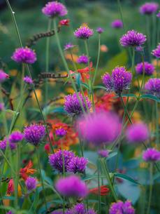 カラフルな花たちの写真素材 [FYI00239179]