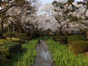 春の兼六園の写真素材 [FYI00239665]