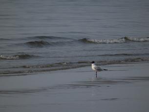 日本海の海鳥の写真素材 [FYI00239674]